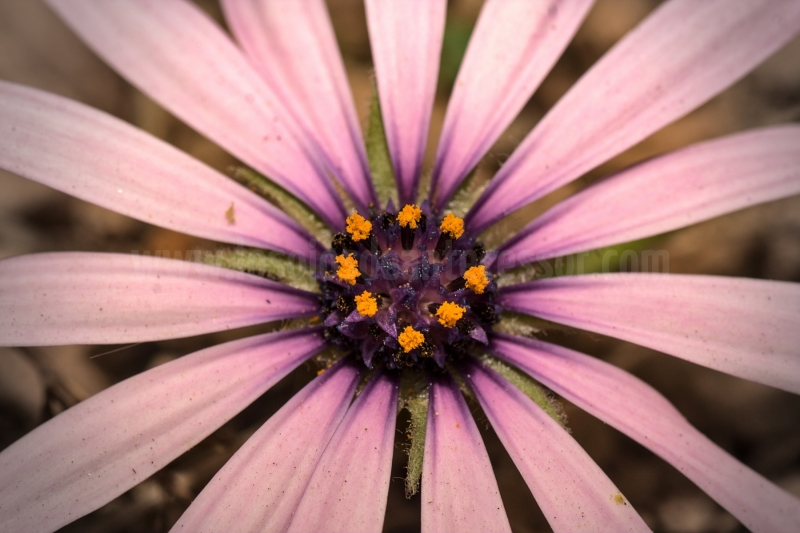 Sexo-en-flor