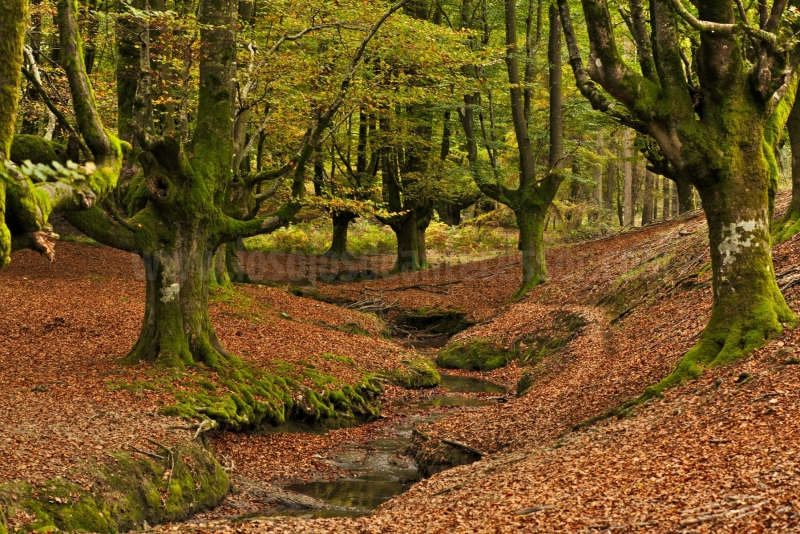 Bosque-de-Otzarreta