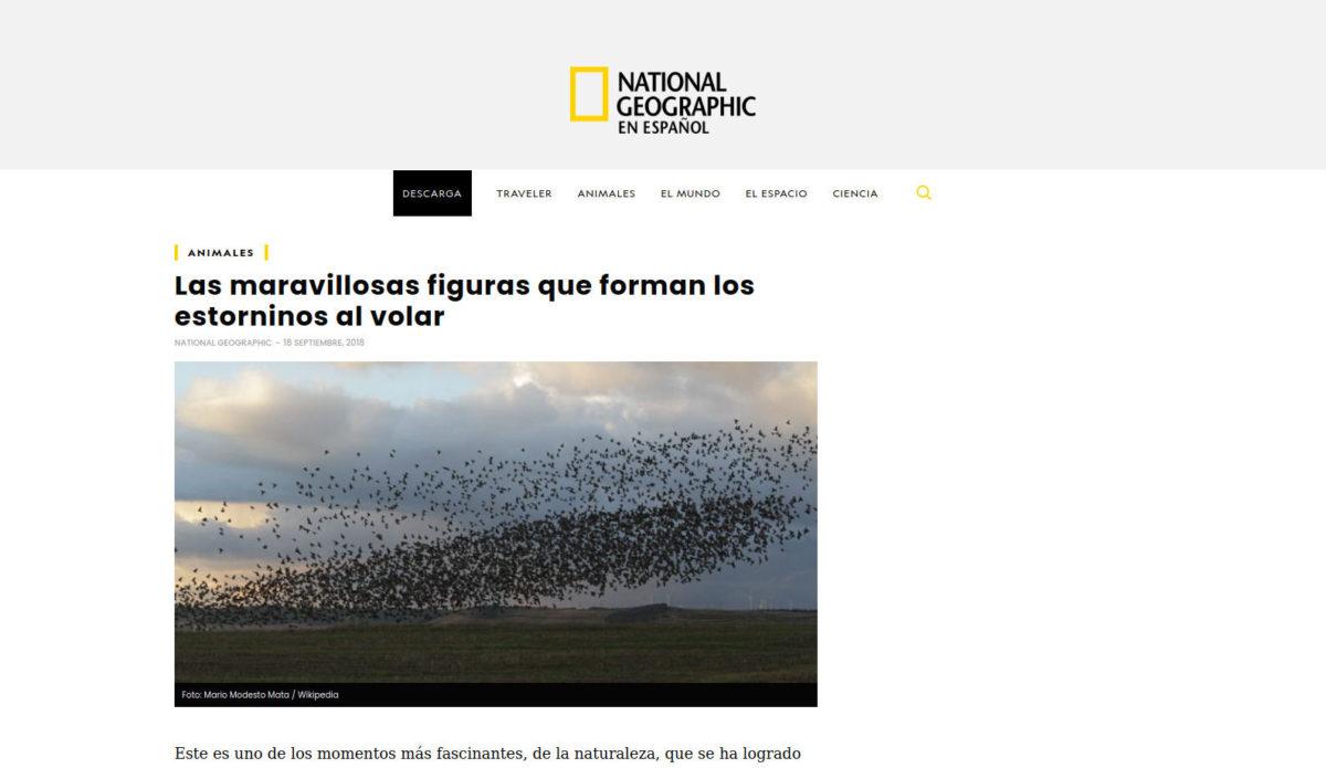 Estorninos en National Geographic España
